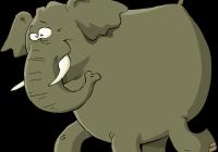 為什麼大象記憶力那麼好?